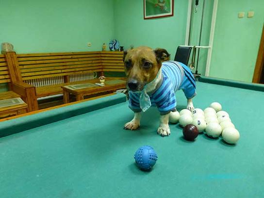 Джек Рассел, одежда для собак