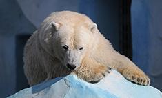 Новосибирский зоопарк попал в десятку лучших европейских зоосадов