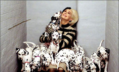 Топ-10 лучших фильмов про собак