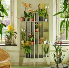 Гид по стилю на 2015 год: орхидеи