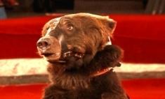 Самые забавные трюки медведей-подростков!