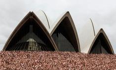 5000 человек разделись на фоне Сиднейской оперы