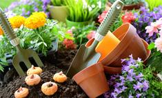 Инструкция: как избавиться от сорняков