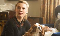 Ваш характер по питомцу: собак любят смелые, котов – умные
