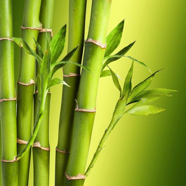 Бамбуковый наполнитель