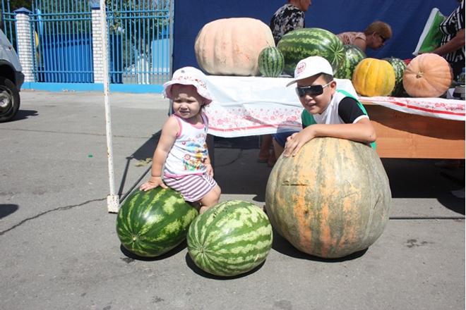 огромный арбуз, Астрахань