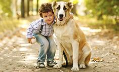 Самые очаровательные собаки Ульяновска. Голосуй!
