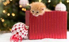 Дух Рождества: 30 фото, которые заставят вас умилиться