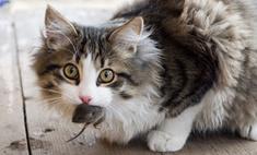 Кот кабинета министров в Британии поймал первую мышь