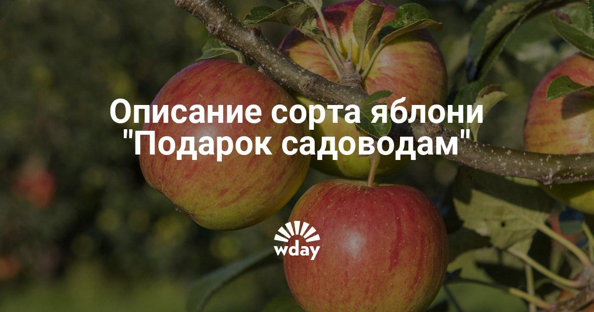Описание яблони подарок садоводам