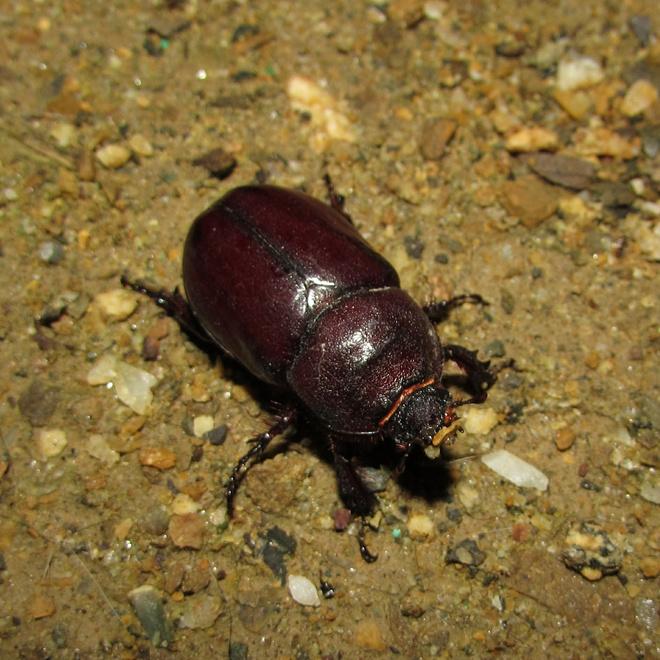 что едят майские жуки в домашних условиях