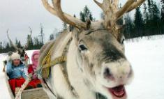 Зима в Казани: где покататься на оленях и бесплатно на коньках