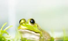 Британская полиция ищет лягушек