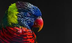 «Природа смотрит на тебя»: девять завораживающих кадров с выставки