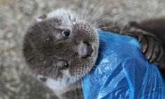 В красноярском зоопарке приютили найденную в подъезде выдру