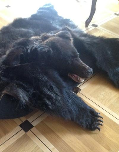 Медвежью шкуру Анастасии Волочковой подарил Аман Тулеев