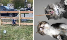 путь котов другие видео умилили неделе