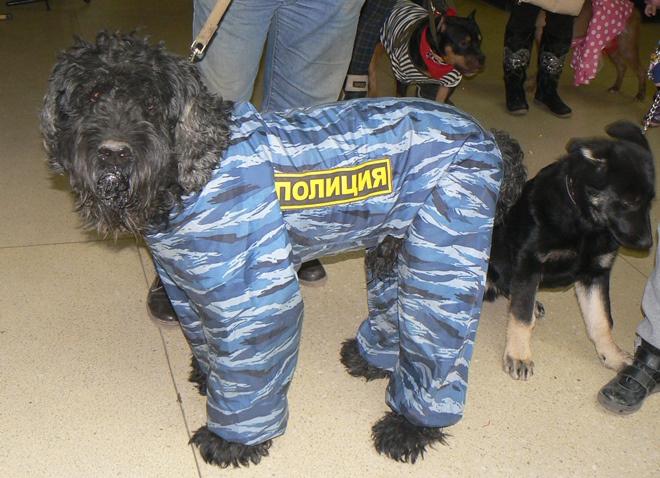 Парад собак в Воронеже