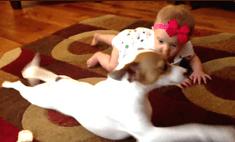 Вау-пес: собака научила младенца ползать