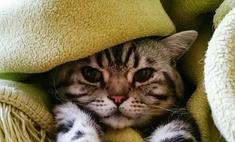 У кота сухой нос: что делать?