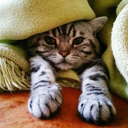 у кота сухой нос что делать