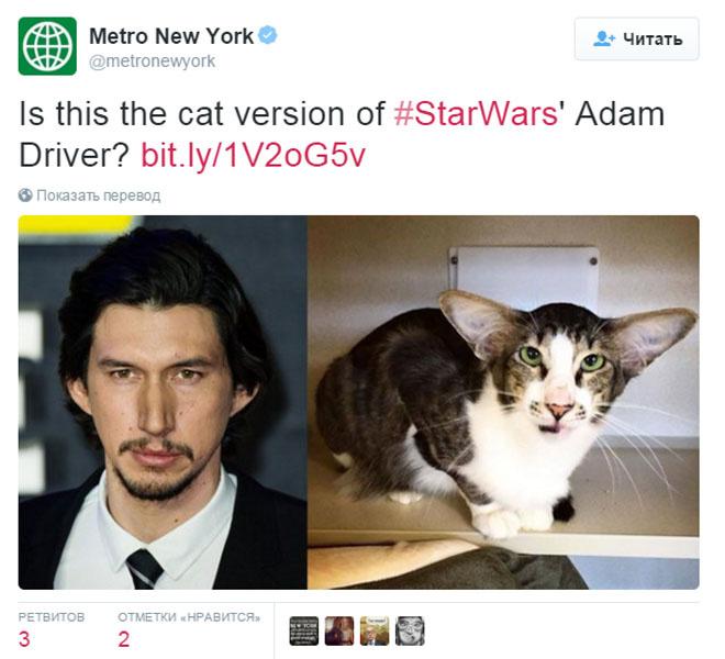 В США нашли кота, похожего на злодея из «Звездных войн»