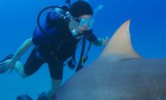 В Сочи открыли курсы поведения с акулами