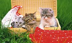 30 самых милых котиков Самары! Голосуй за самого няшного!