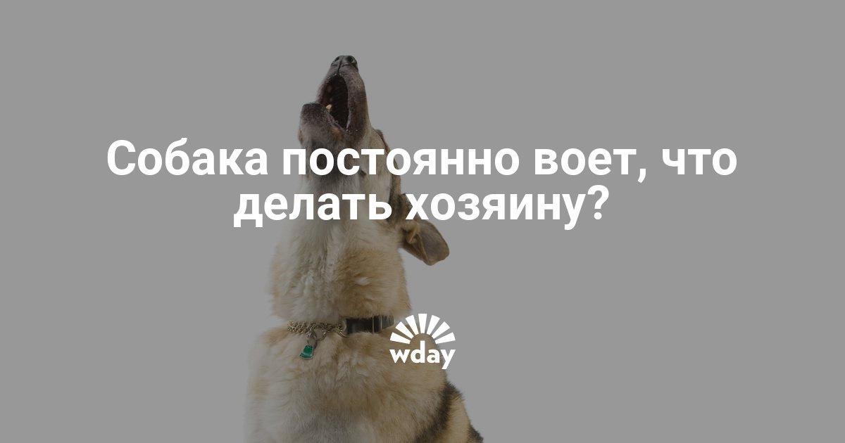 что делать если воет собака углерода