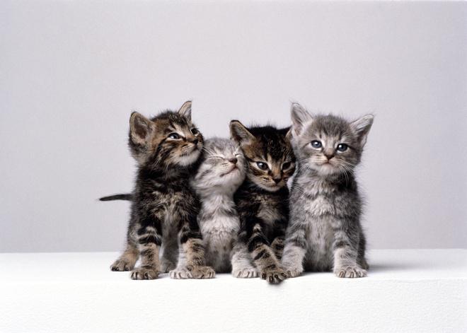 Лишай у котенка