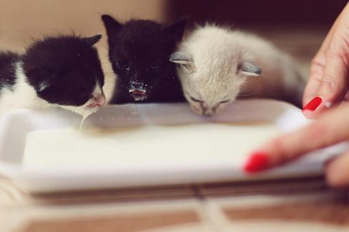 Как приучить котенка к миске