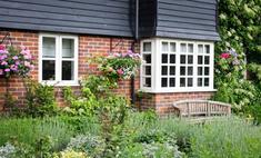 Пряные травы на даче: советы для начинающих