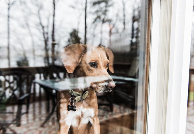 Собака за стеклом