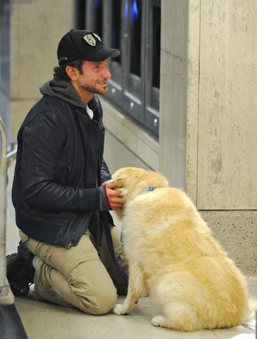 Брэдли Купер, собаки знаменитостей