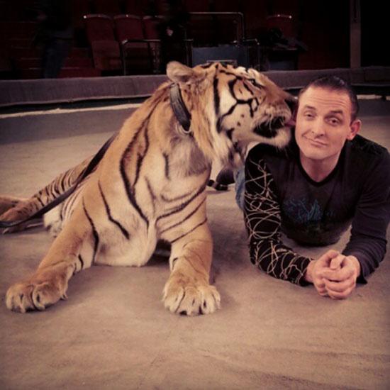 Аскольд Запашный пострадал от тигрицы на съемках сериала