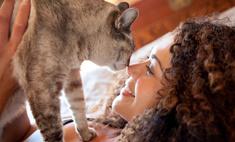 Почему категорически нельзя заводить кота, если ты не замужем
