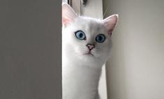 Новая звезда «Инстаграма»: кот с красивыми глазами