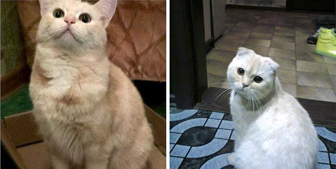 Полторы тысячи кошек претендуют на звание «Главная кошка Челябинска»