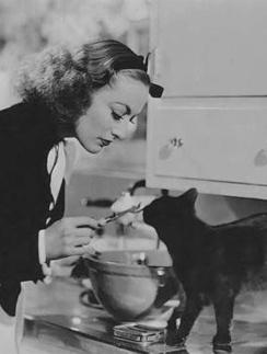 Раздробите свое питание. Отдайте половину любимой кошке!