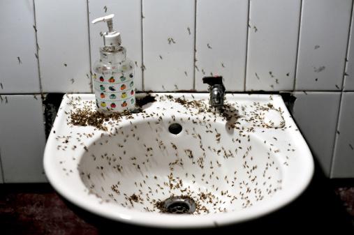 мелкие насекомые в ванной