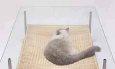 Стол для любителей кошек