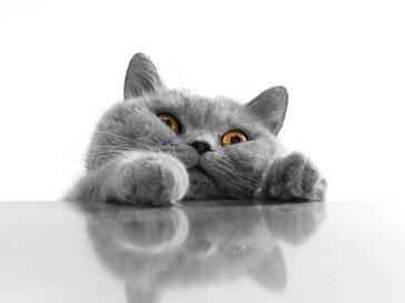 «День мартовского кота»