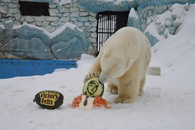 Красноярский медведь Феликс ест торт в виде Трампа