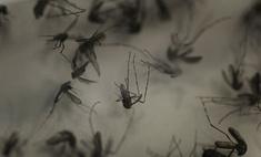 Комары больше не будут переносчиками малярии