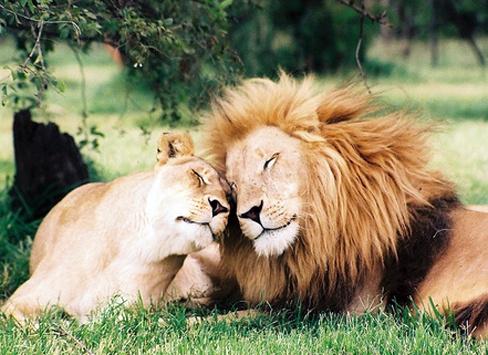 Тест: кому из мира животных ты подражаешь в сексе?