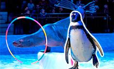Шоу пингвинов и морских котиков в Воронеже