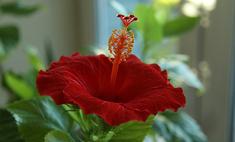 Топ-10 самых красивых домашних цветов