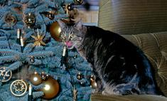 Как защитить новогоднюю елку от кота: 7 самых хитрых способов с фотоинструкцией