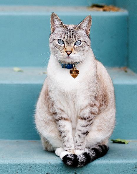 Кошка, фото
