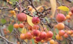 Осенние напасти: как уберечь здоровье?